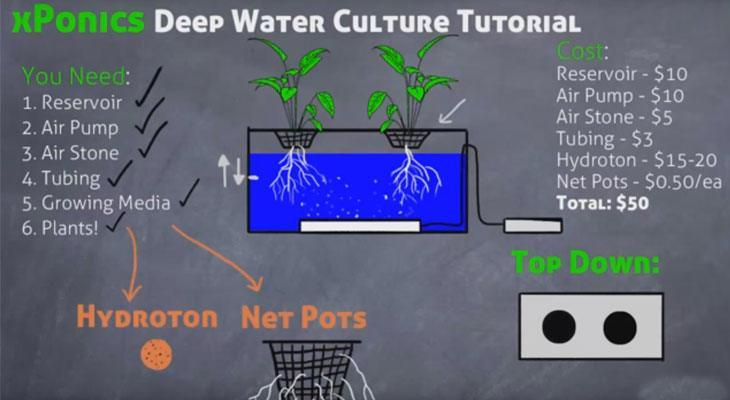 How a Deep Water Culture (DWC) system works.