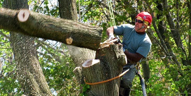 Local tree services mulch