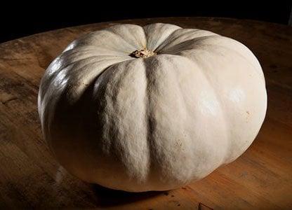 Silver Moon Pumpkin