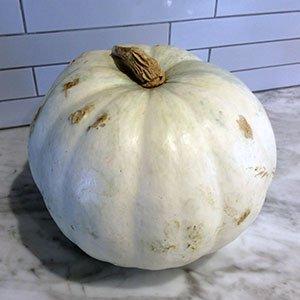 Valenciano Pumpkin